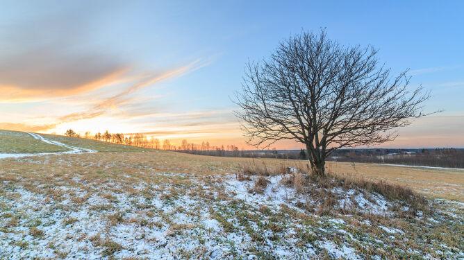 Pogoda na 5 dni: przed nami śnieżny epizod, miejscami mocniej się zabieli